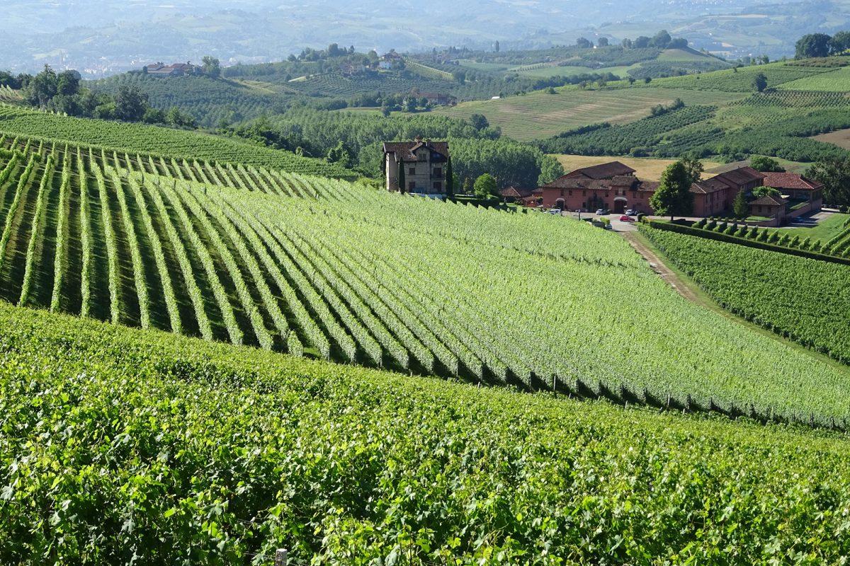 Tenuta Carretta | The vineyards