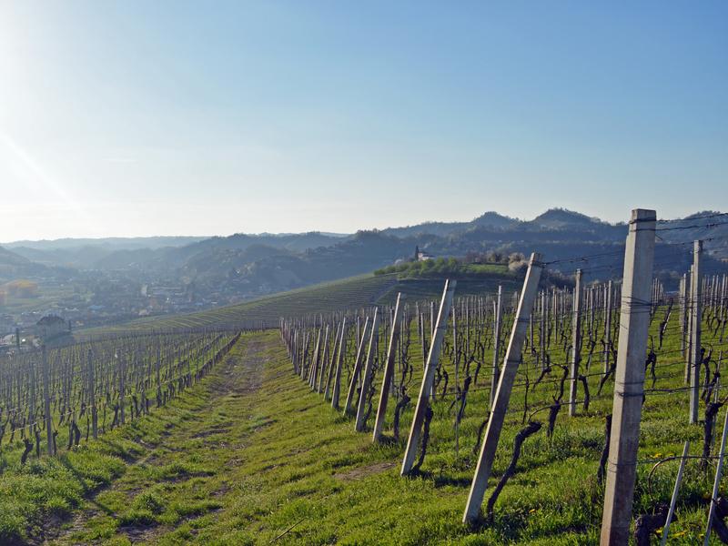Vine-Trekking Grapes Road